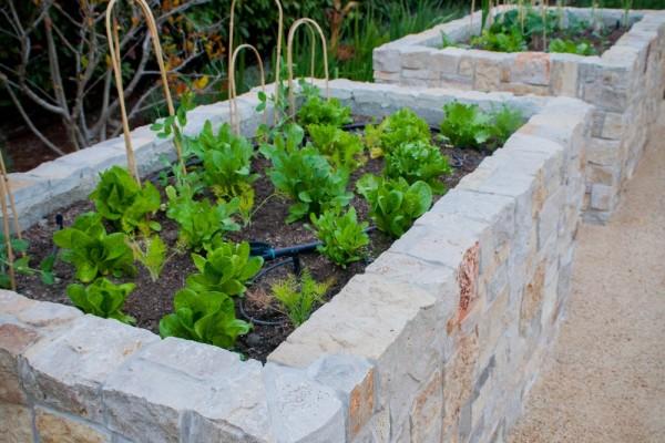 VegetableGardens3 (1000x1500)