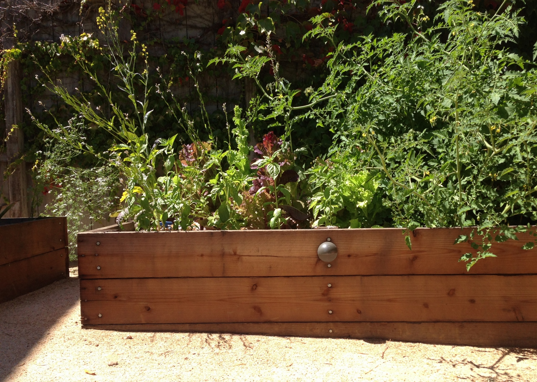 VegetableGardens5 (1500x1067)
