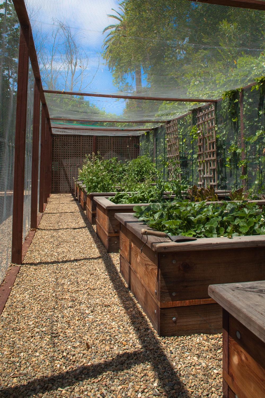 VegetableGardens6 (1000x1500)