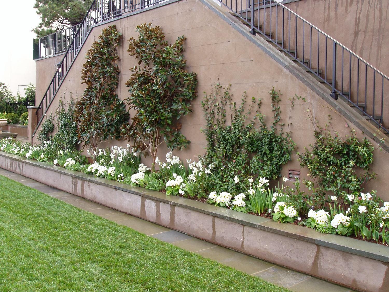 Espalier Trees For The Garden Terra Ferma Landscapes