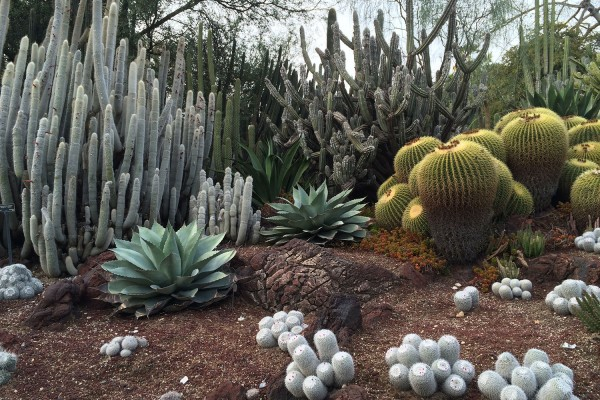 Emerging boulder at The Huntington's Succulent Garden – Photographed by Adam Nugent
