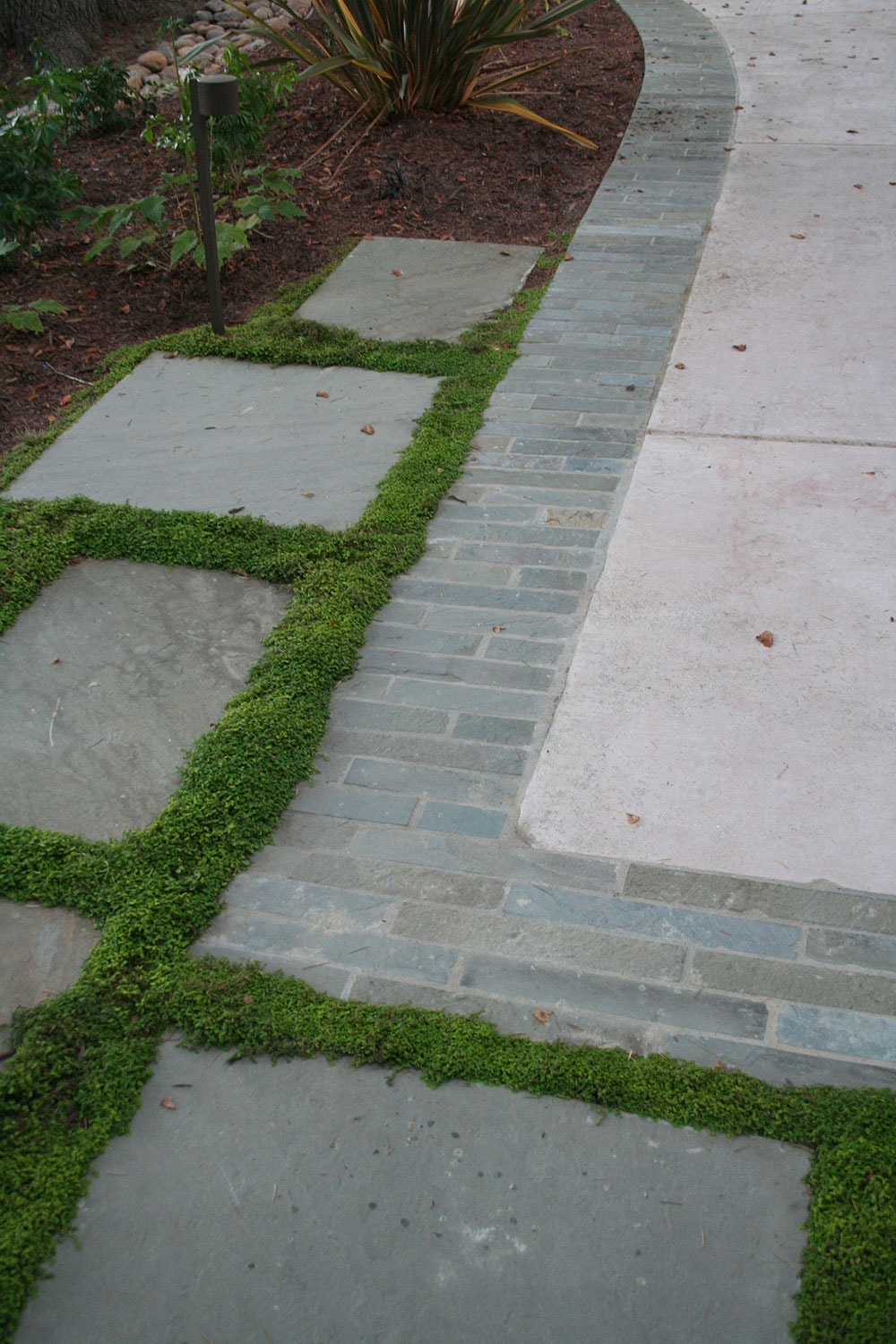 How to plant ground cover between pavers - Image2