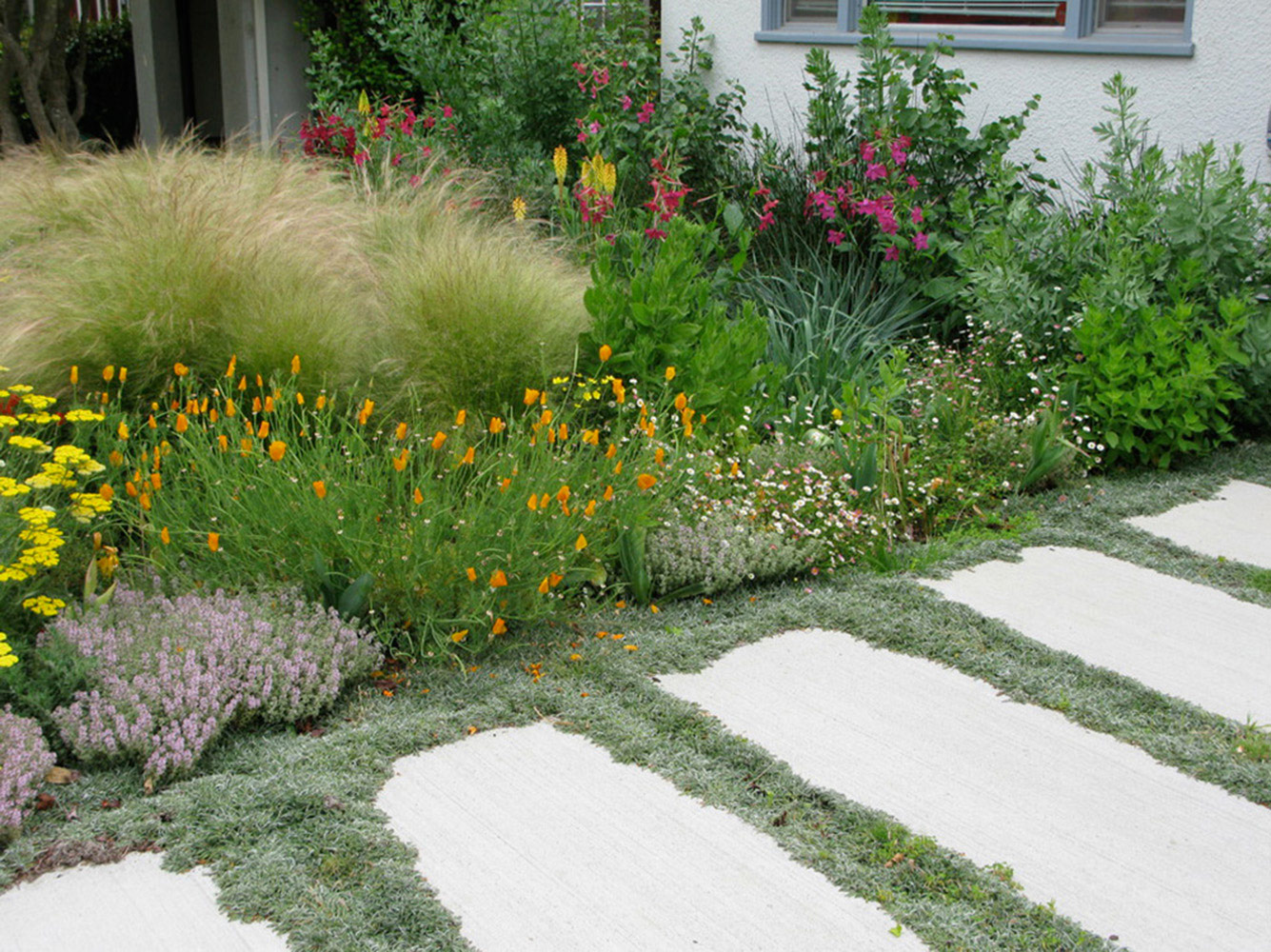 How to plant ground cover between pavers - Image4