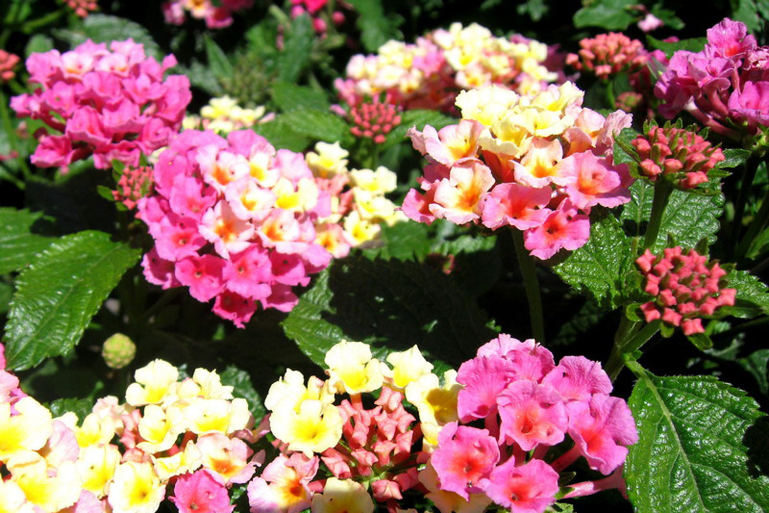 Flowers for a Dry California