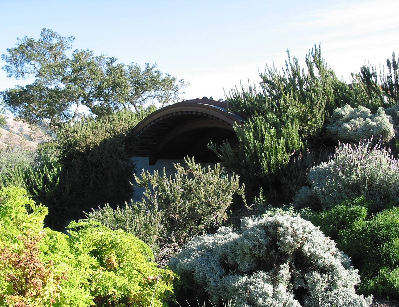 Native Plants Terra Ferma Landscapes