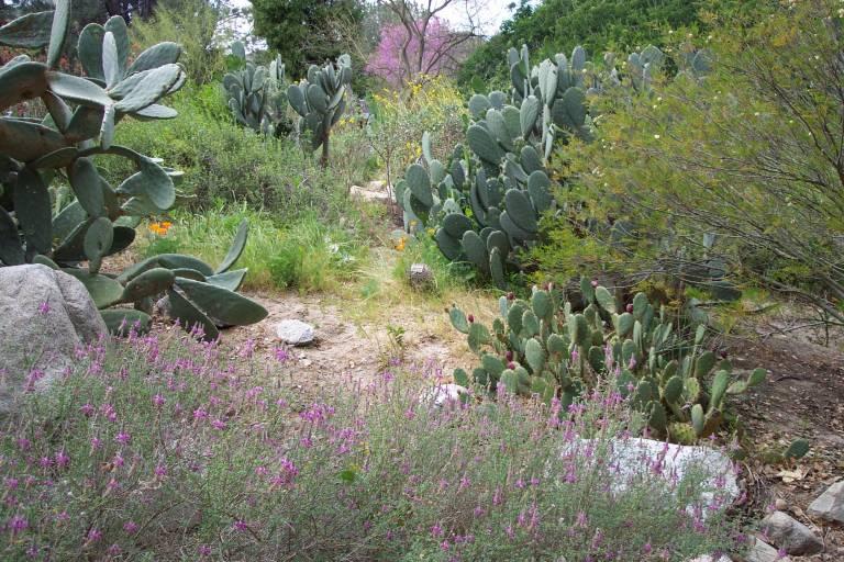 UCSB Botanical Garden