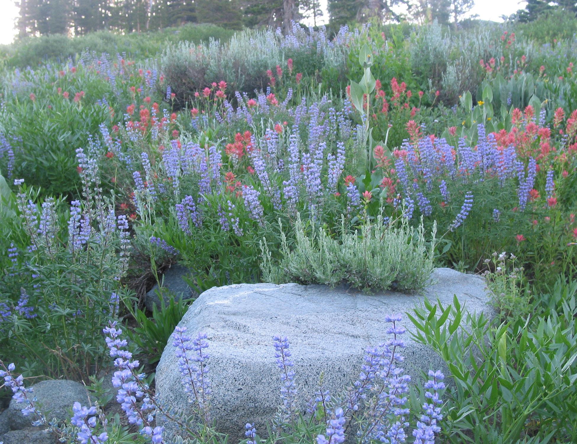 Middlebrook Gardens