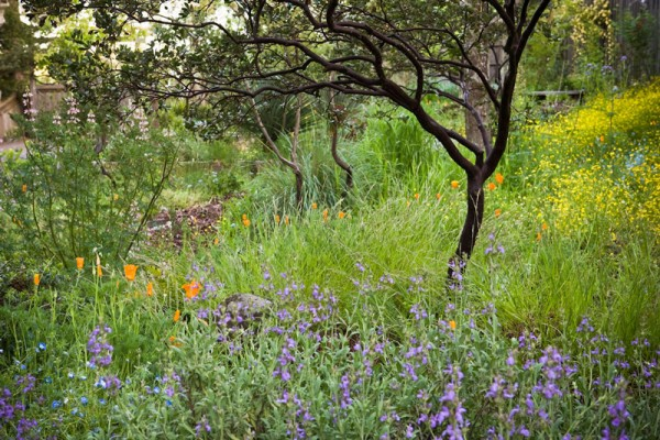 Saxon Holt Native Garden