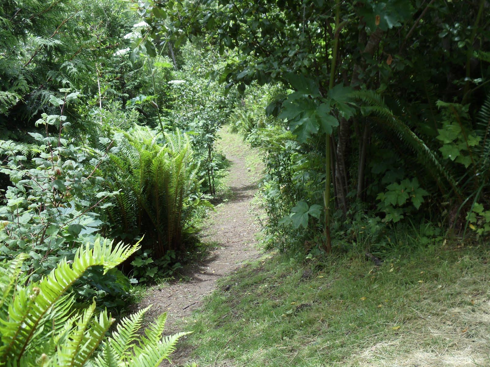 Riparian Woodlands